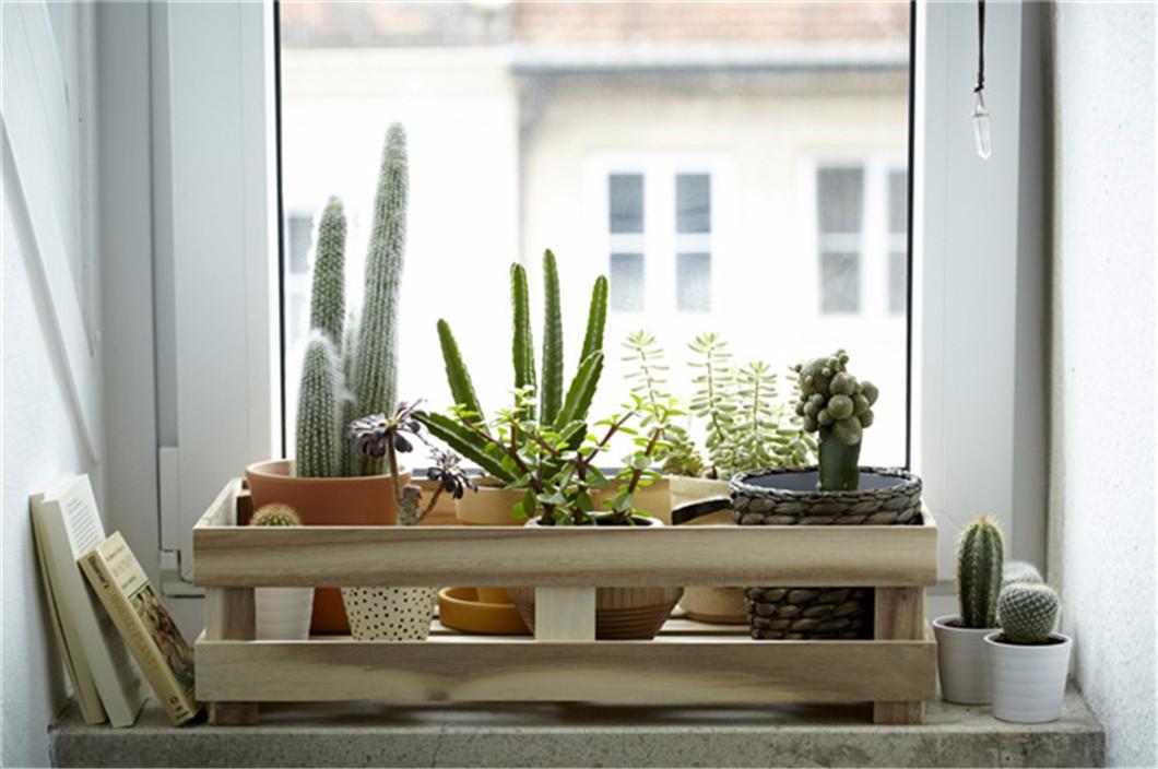 用植物装饰的六种方法