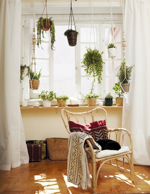 如何打造窗台花园